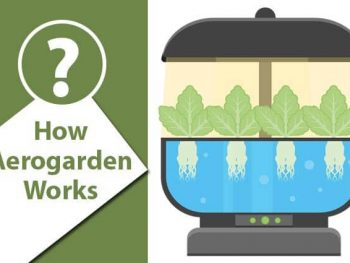 How Aerogarden Works