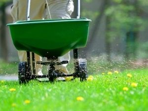 How to Fertilize Lawn Perfectly
